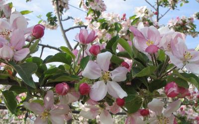 C'est le printemps avec Tentation®