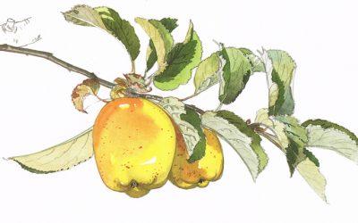 L'art de déguster une pomme Tentation®
